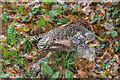 TQ2826 : Dead Bird at Side of the Road at Hammer Hill, West Sussex by Christine Matthews
