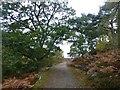 NU0503 : Oak tree beside the track by Russel Wills