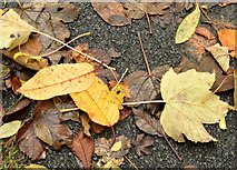 J3673 : Autumn leaves, Comber Greenway, Belfast - November 2015(2) by Albert Bridge