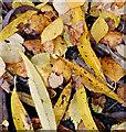 J3673 : Autumn leaves, Comber Greenway, Belfast - November 2015(3) by Albert Bridge