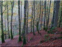 NH5966 : The defile of the Allt Graad, Evanton Community Wood by Julian Paren