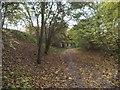 SO8696 : Railway Walk Leaves by Gordon Griffiths