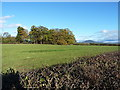 SJ5405 : Small copse at Upper Cound by Richard Law