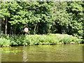 TG3115 : River Bure 5mph Speed Limit by David Dixon