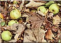 J3371 : Crab apples, Stranmillis, Belfast (November 2015) by Albert Bridge