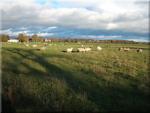 NZ2118 : Grazing near Denton by JThomas