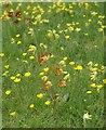 ST3736 : Churchyard flowers, Sutton Mallet by Derek Harper