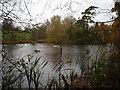 SU0381 : Tockenham Reservoir, Wilts & Berks Canal by Vieve Forward