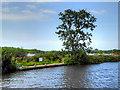 TG3116 : River Bure, Wroxham Broad Island by David Dixon