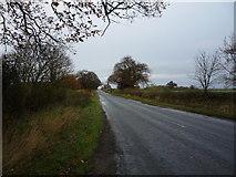 NZ2114 : B6275 towards Piercebridge by JThomas
