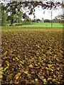 SO8845 : Autumn leaf fall in Croome Park by Philip Halling