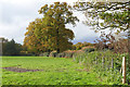 SU9459 : Hedgerow oaks, Bullhousen Farm by Alan Hunt