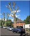 ST5775 : Belvedere Road, Redland by Derek Harper