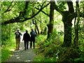 V9157 : Walkers in Glengarriff Forest by Jonathan Billinger