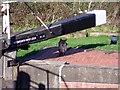 SK4926 : Fox at Kegworth New Lock by Ian Calderwood