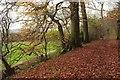 TQ3954 : Lower edge of Titsey Plantation by Derek Harper