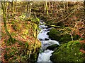 NY3804 : Stock Ghyll Force, Top of the Waterfall by David Dixon