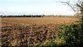 TG2001 : Fields east of Swardeston by Evelyn Simak