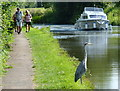 SP8832 : Heron on the towpath of the Grand Union Canal by Mat Fascione
