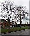 SJ7407 : Two bare trees, Innage Road, Shifnal by Jaggery