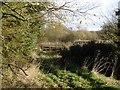 NO4611 : Lade, Cameron Reservoir by Richard Webb