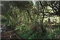 SX9474 : Bushes by Oak Hill Cross Road by Derek Harper
