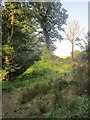 SX2859 : Track to field, Great Trethew by Derek Harper