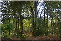 TQ7513 : Fore Wood by N Chadwick