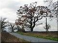 SK2110 : Roadside tree, Main Road, Harlaston by Christine Johnstone