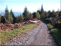J3630 : Track descending through a cut-over section of Donard Wood by Eric Jones