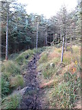 J3629 : Muddy forest track in Donard Wood by Eric Jones
