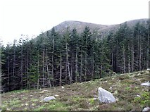 J3629 : A wall of trees in the Donard Wood Panhandle by Eric Jones