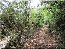 SK5276 : Path alongside Worksop Road by Jonathan Thacker