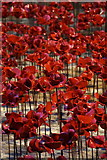 SJ3490 : Poppies from Weeping Window, St George's Hall, Liverpool by Mike Pennington