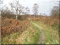 SU9666 : Chobham Common by David Howard