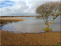 SS7981 : Kenfig Pool by Alan Hughes