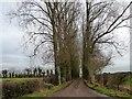 SE6066 : Tree-lined drive to Wandmire Farm by Christine Johnstone