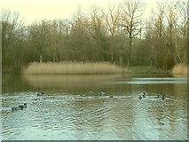 SE2034 : Ducks on Woodhall Lake by Stephen Craven