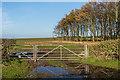 NU1337 : Gate by Ian Capper