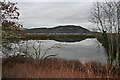NH6546 : Merkinch Nature Reserve by Anne Burgess