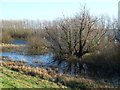 TL5091 : Woodland under water - The Ouse Washes near Welney by Richard Humphrey