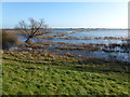 TL5292 : Flood water from the upper Ouse - The Ouse Washes near Welney by Richard Humphrey