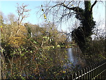 TM1645 : Lake in Christchurch Park by Adrian Cable