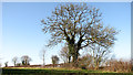 TG3910 : Ivy-clad oak tree on a field boundary by Evelyn Simak