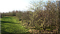 TG3910 : Path in Jubilee Wood by Evelyn Simak