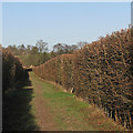 TL3638 : Between high hedges by John Sutton