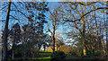 TQ2997 : Trees in Japanese Water Garden Trent Park, Enfield by Christine Matthews