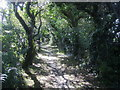SW7618 : Path to Penhallock by Shaun Ferguson