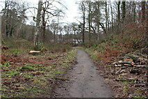 NS2209 : Path to the Swan Pond, Culzean Country Park by Billy McCrorie