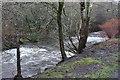 ST1796 : Weirs, River Sirhowy, Pontllanfraith by M J Roscoe